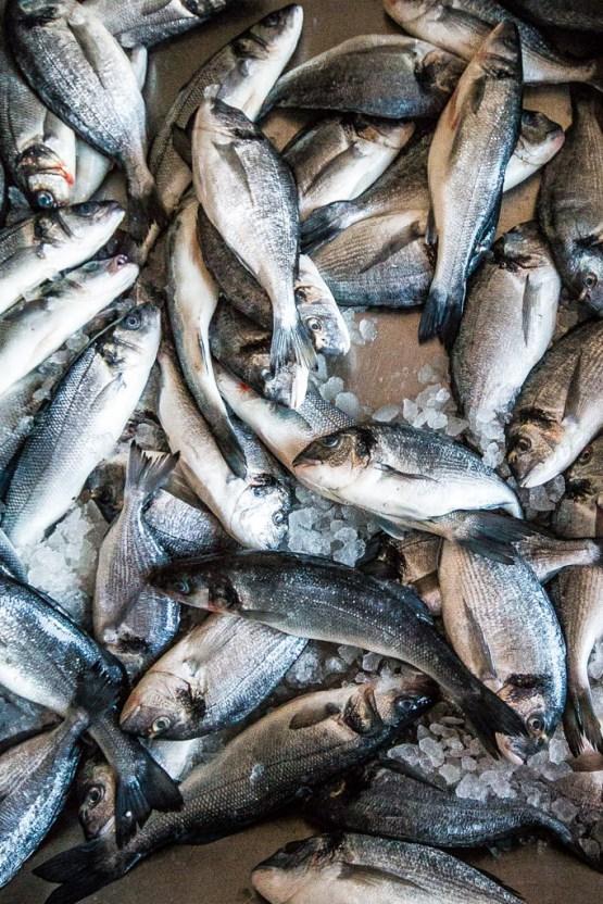 Foto von fangfrischem Fisch im Hafen von Jaffa