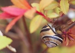 Snails-6250 copy2