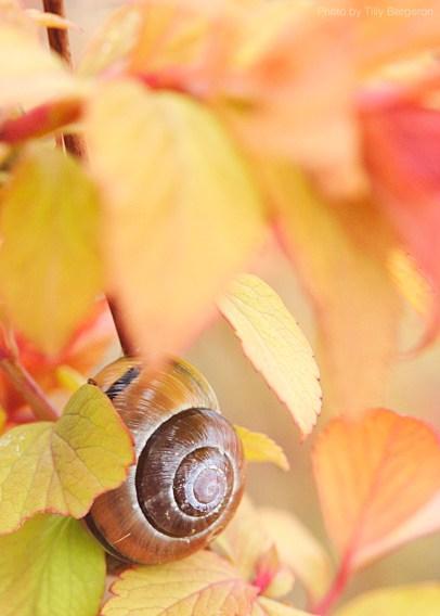 Snails-6271 copy2