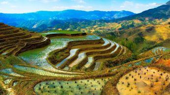 Rice Terrace