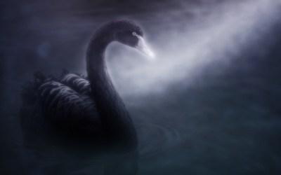 En svane forkledd som et virus