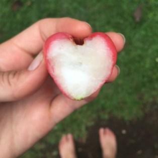 manzana-de-agua-4
