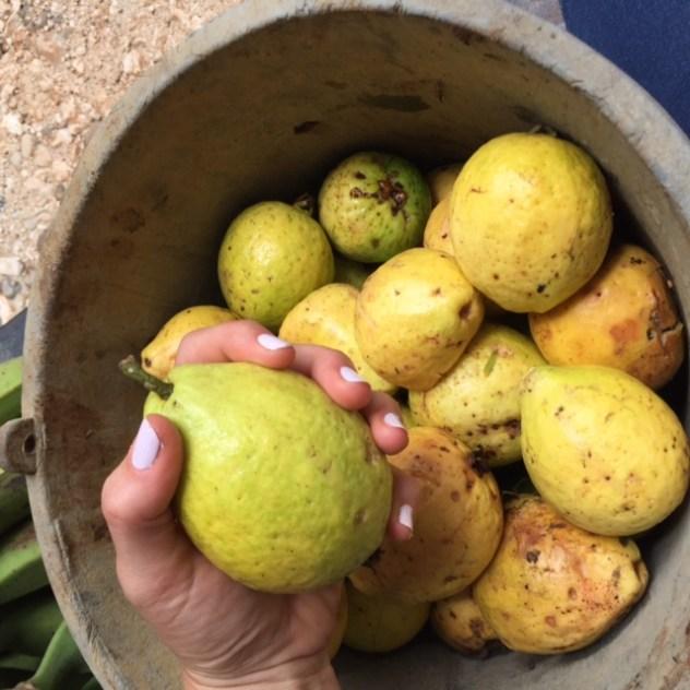 guayaba-costa-rica