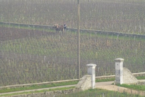 Beautiful Vineyard Views - Burgundy.  Horse drawn vine work.