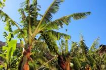 Bananen gedeihen hier besonders gut