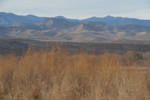 Bosque del Apache #9315