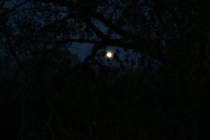 Bosque del Apache #9406