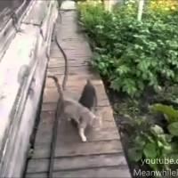 Cão carrega gato para casa