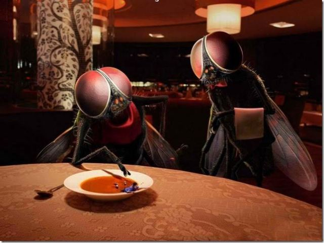 humano no prato