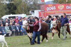Mackenzie Show Grand Parade 0026