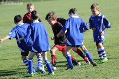 Junior Football 0088
