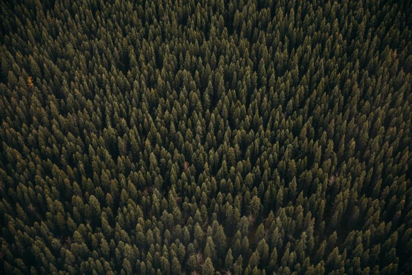 Aerial view of Alaska timber