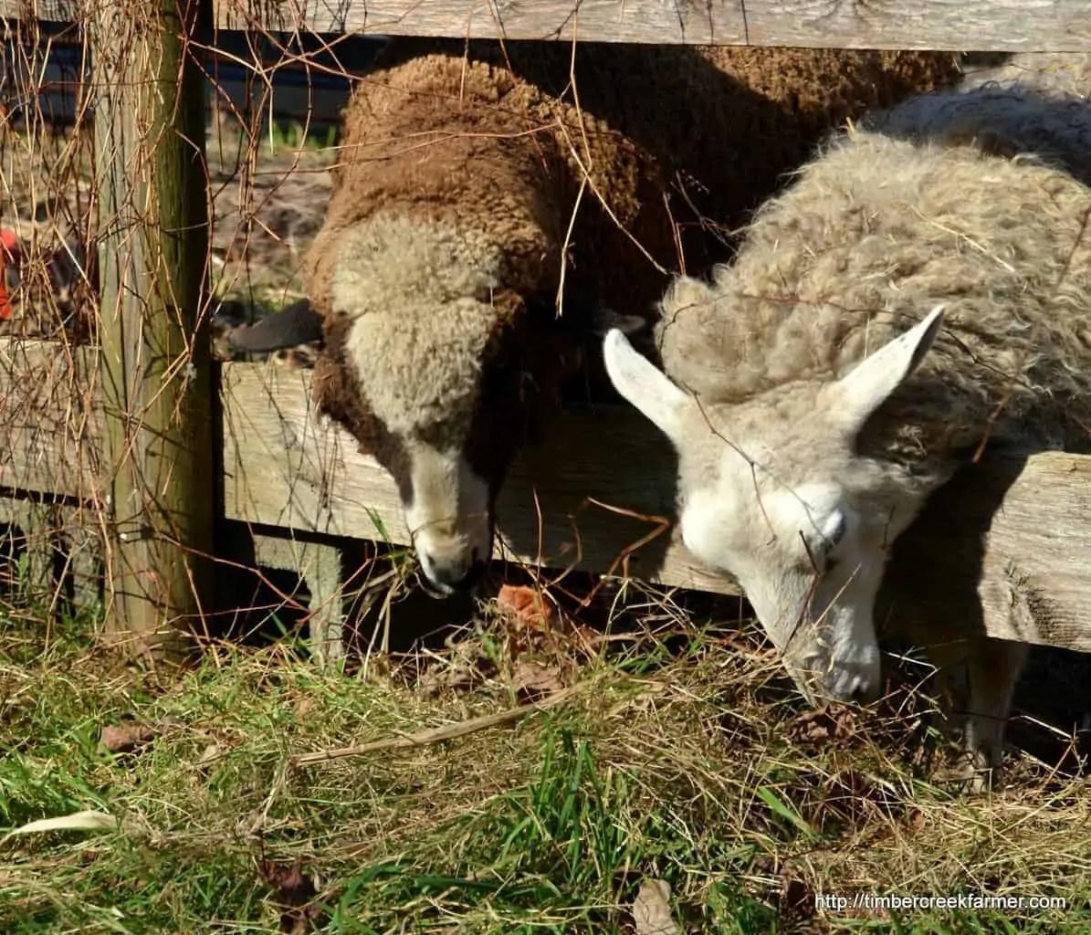 Farm Animal Care Binder For Your Homestead Joseph Kitchen