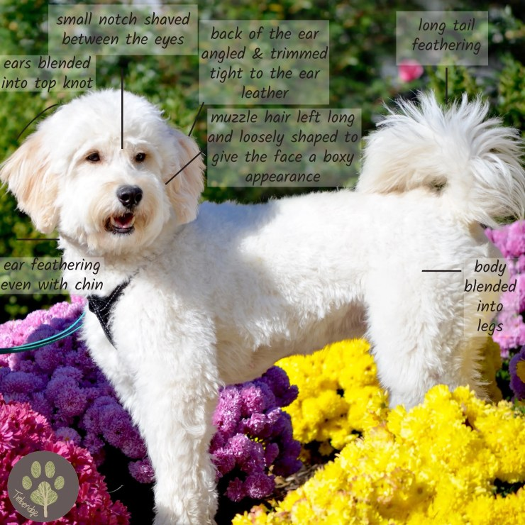 How To Groom A Goldendoodle Timberidge Goldendoodles