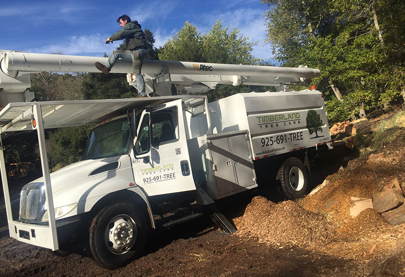 Truck used by Timberland Tree Care in Walnut Creek, California
