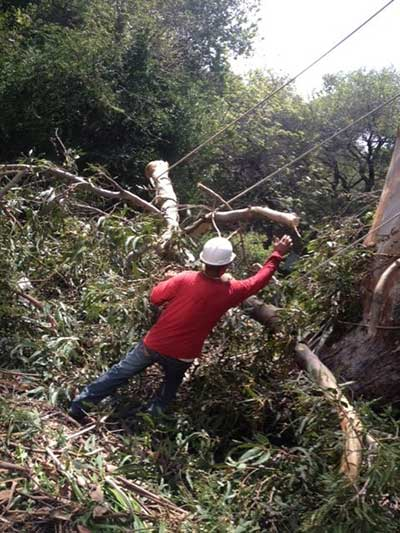 Tree trimmer with a sycamore in San Ramon