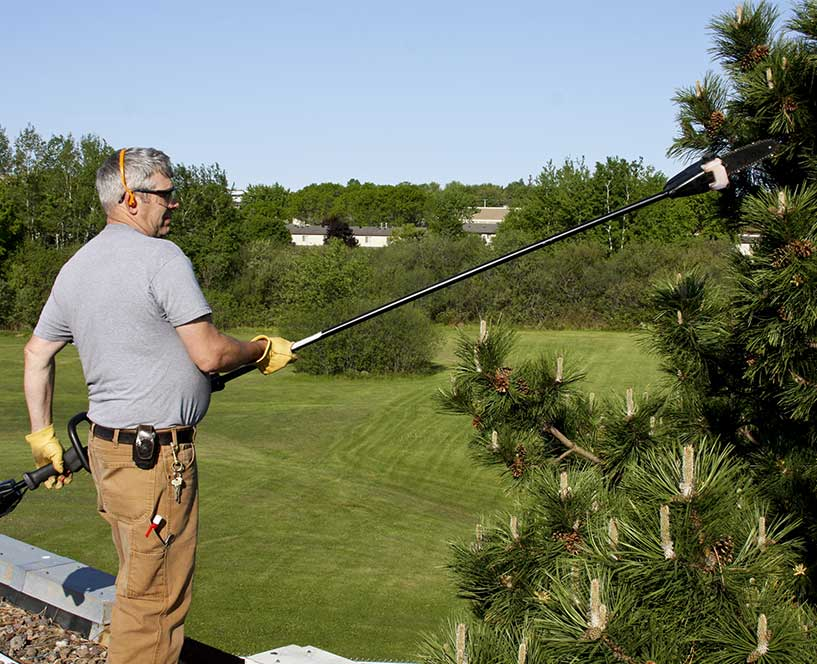 Tree service in San Ramon, CA