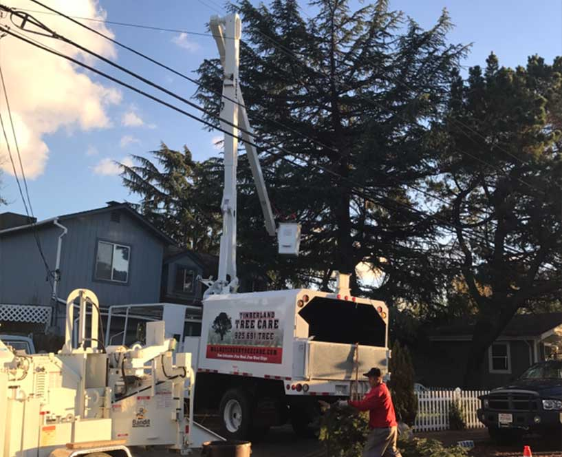 Tree trimming in Walnut Creek using a bucket lift