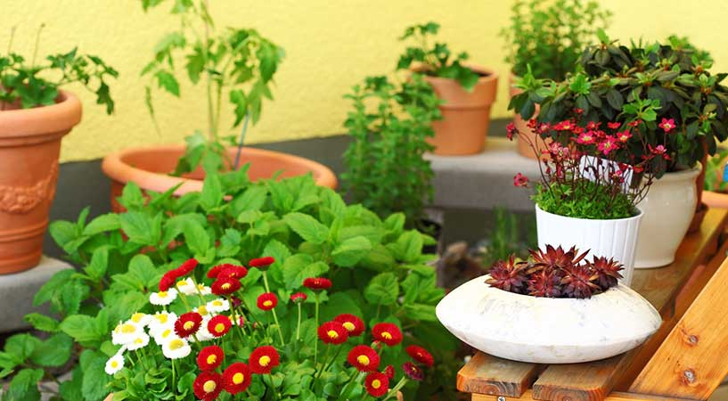 The Best Plants for an Apartment Balcony