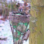 Gerade richtig für den Winter: Futterstation für Gartenvögel