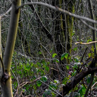 undergrowth2