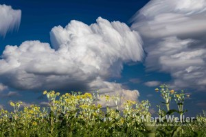 Timestack photography of clouds over field of flowers