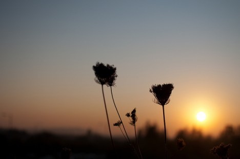 Morning silhouettes