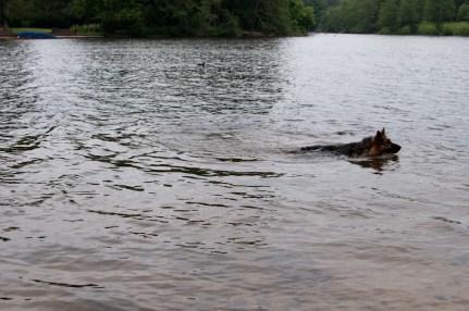 Cody-swimming-10