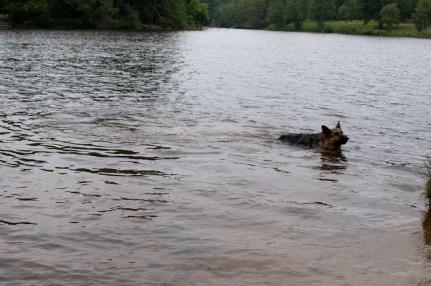 Cody-swimming-12