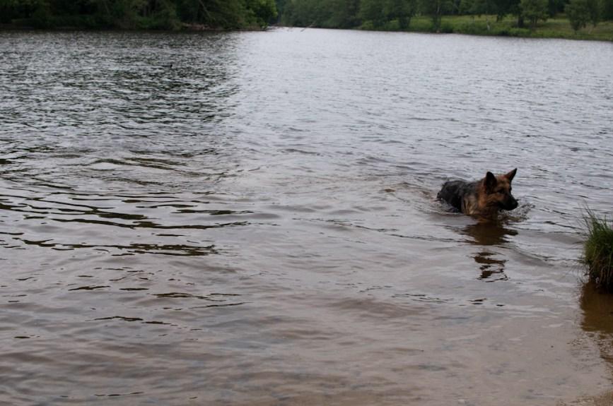 Cody-swimming-16