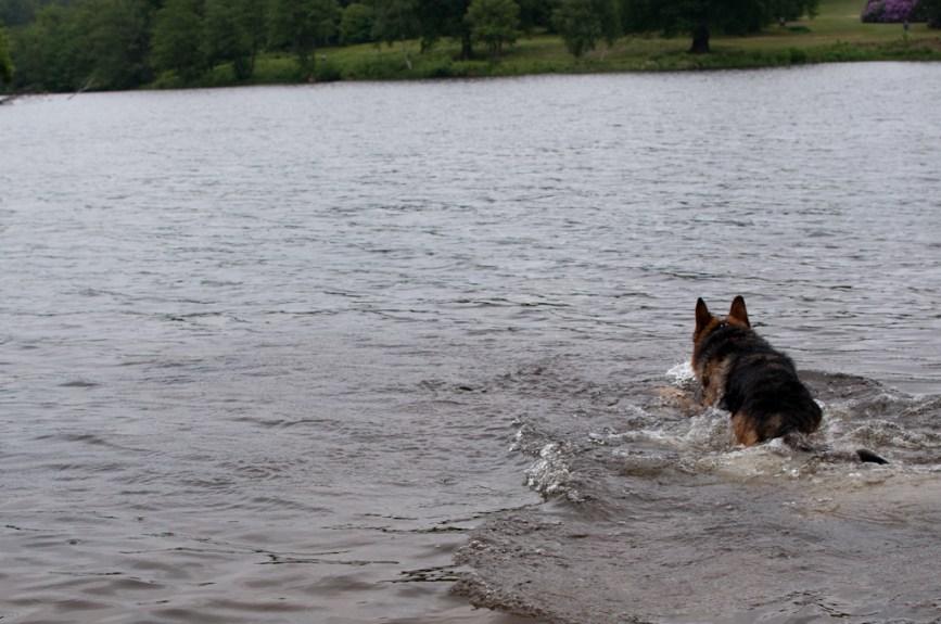 Cody-swimming-7