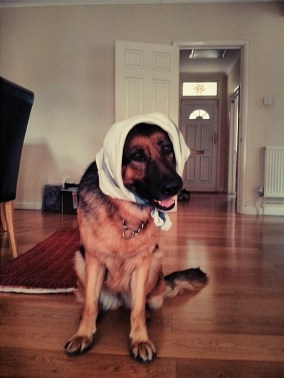 Ha! Cody. With a tea towel on her head. Because, why not?