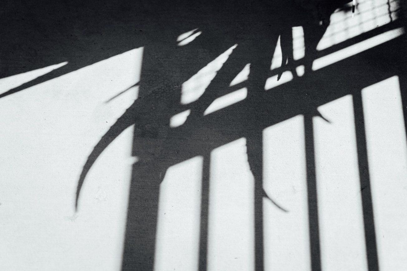 Black and white photo of aloe vera shadow.
