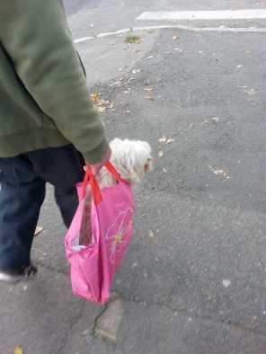 puppy-in-a-bag-03