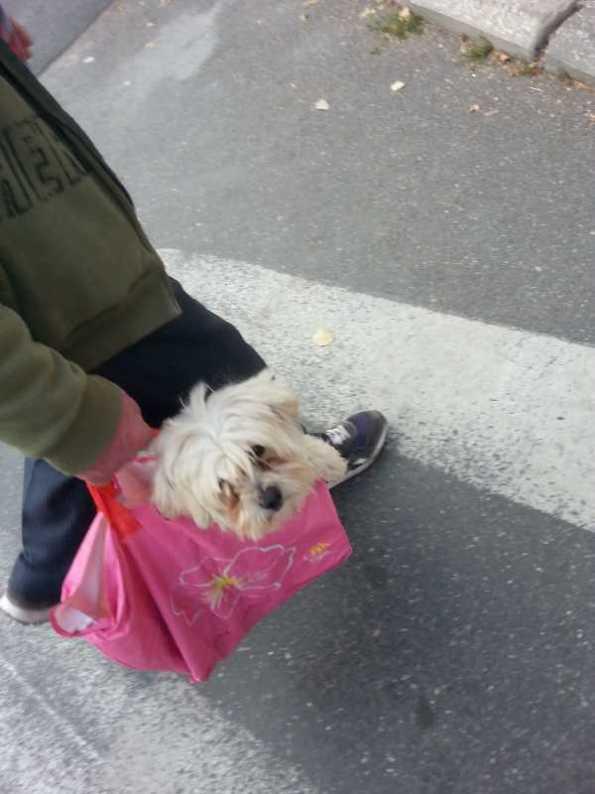 puppy-in-a-bag-06