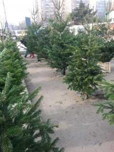 CHRISTMAS-TREE-SALE-04