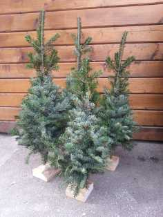 CHRISTMAS-TREE-SALE-05