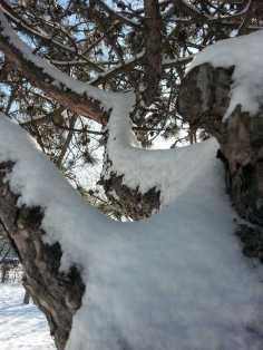 White-blanket-of-snow-02