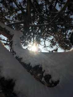 White-blanket-of-snow-05