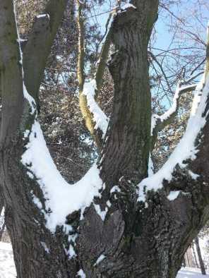 White-blanket-of-snow-08
