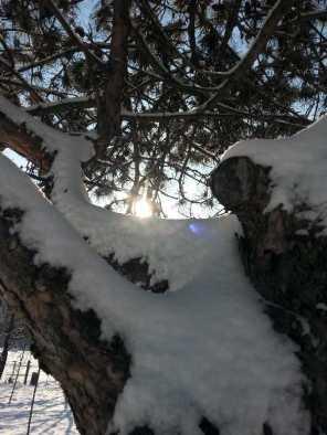 White-blanket-of-snow-09