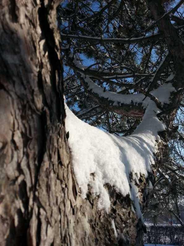 White-blanket-of-snow-11