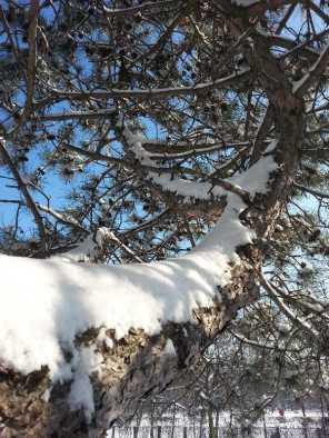 White-blanket-of-snow-13