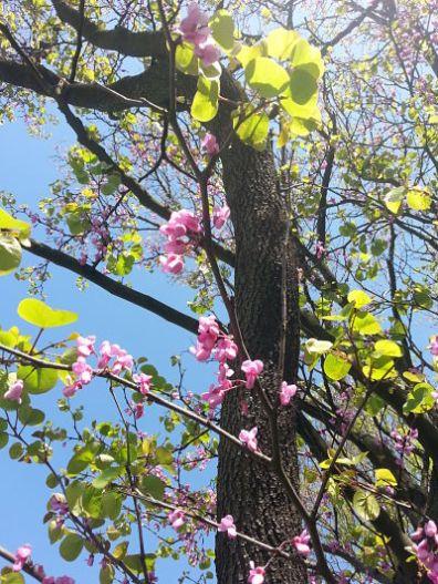 beautiful-pink-flowers-04