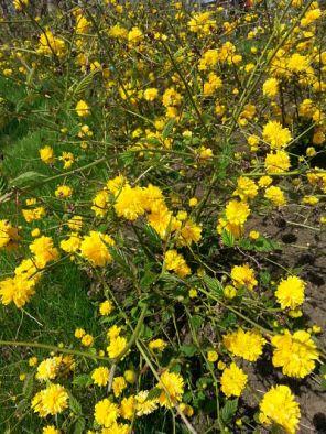mopana-yellow-land-04