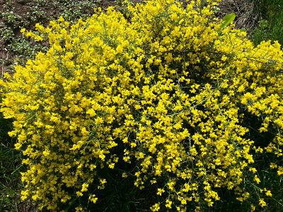 mopana-a-yellow-life-01