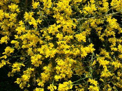 mopana-a-yellow-life-02