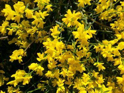 mopana-a-yellow-life-03