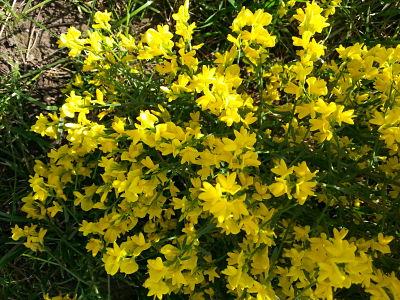 mopana-a-yellow-life-07