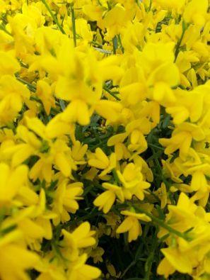 mopana-a-yellow-life-11